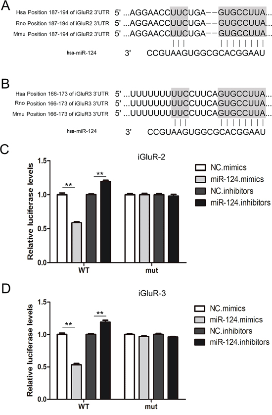 Identification of iGluR2/3 as direct targets of miR-124-3p using luciferase assays.