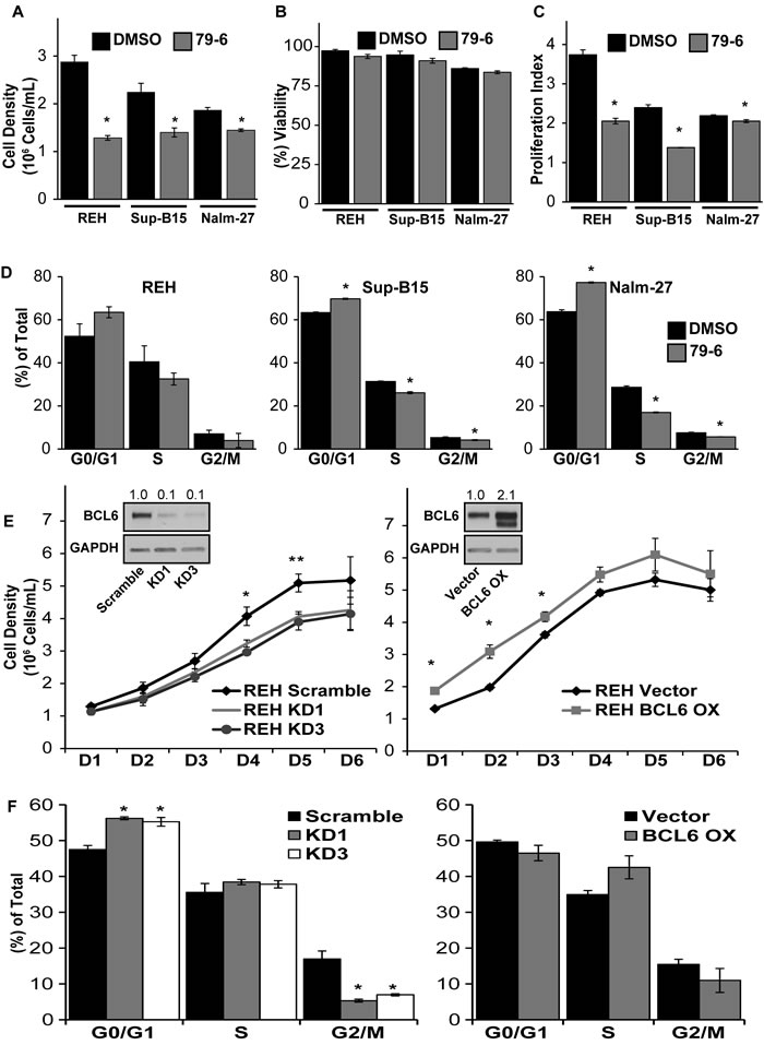 Modulation of BCL6 alters cell cycle progression and proliferation of ALL cells.
