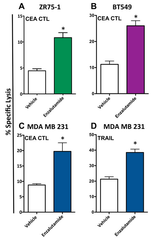 Enzalutamide increases the sensitivity of breast cancer cells to T cell- and TRAIL-mediated killing regardless of androgen receptor (AR) expression.