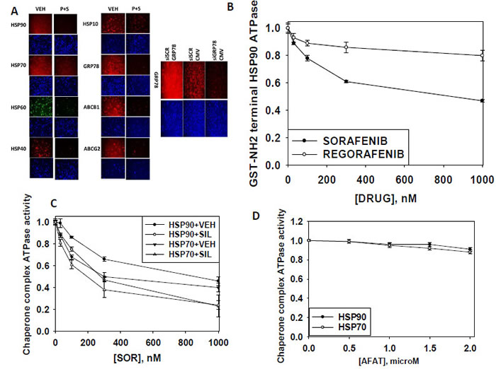 [Pemetrexed + Sorafenib] treatment regulates the expression of multiple chaperone proteins and plasma membrane drug efflux pumps.
