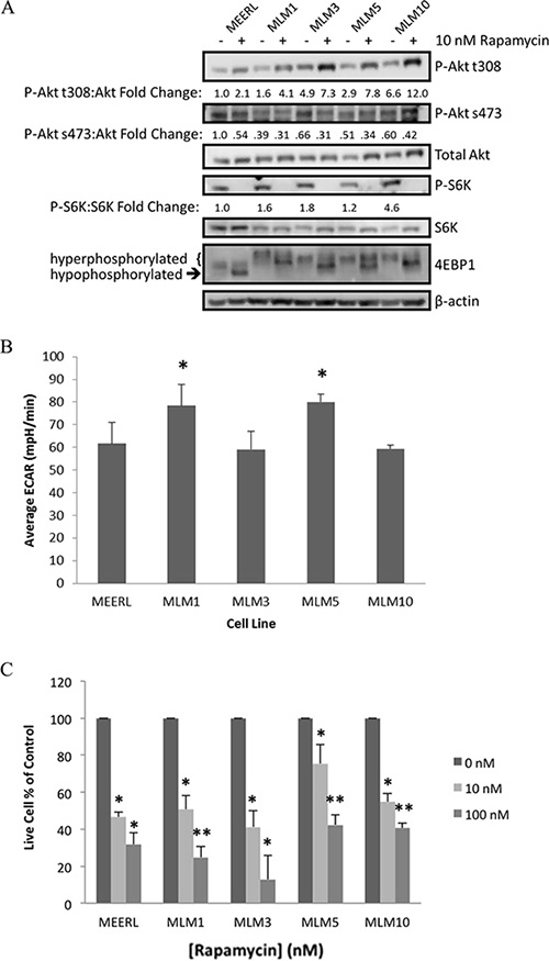 mTOR and metabolic activity are comparable or elevated in recurrent/metastatic HPV+ OPSCC cell lines