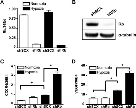 Ablation of Rb leads to transcriptional dysregulation of HIF1-target genes involved in metastasis and angiogenesis.
