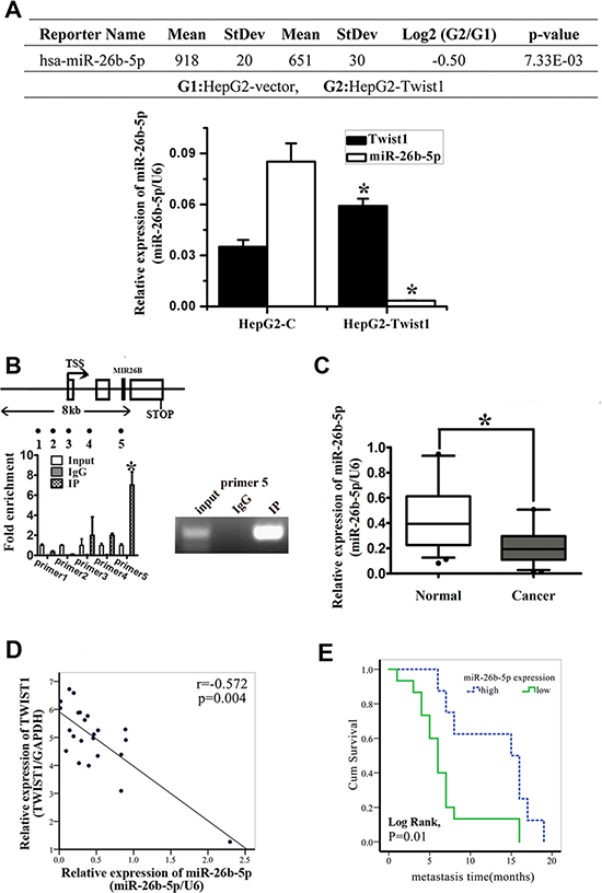 miR-26b-5p is downregulated in HCC tissues and cell lines and is associated with tumor short-term recurrence and metastasis.