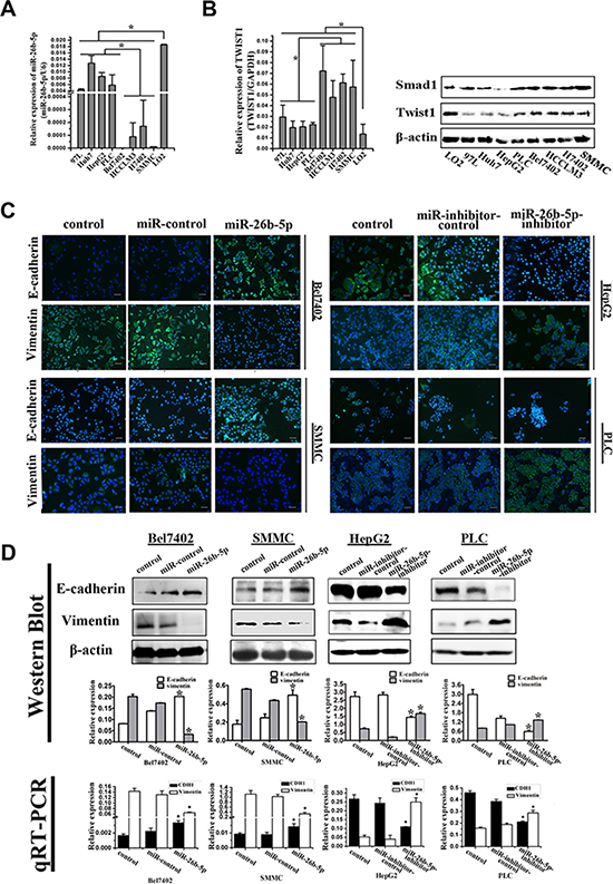 miR-26b-5p is associated with the EMT phenotype in HCC cells.