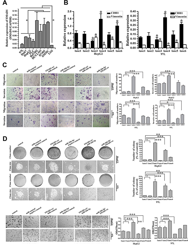 MiR-26b-5p and SMAD1 affect HCC cell migration and invasion by way of regulation of EMT in HepG2 and MHCC97L cells.