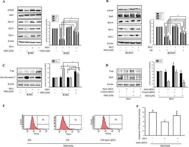 Activation of stat5 and P-gp contributed to resistance toward IM in CM.