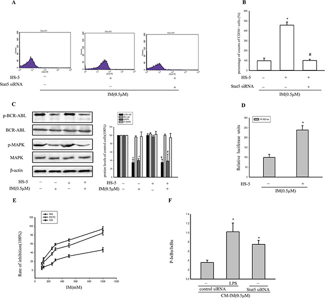 BCR/ABL-independent activation of stat5 maintained NF-κB activity.