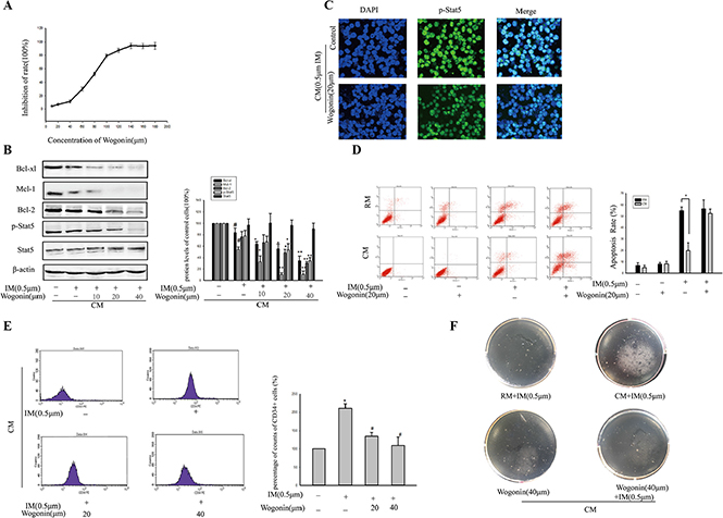 Wogonin overcame IM resistance of K562 cells within BM microenvironment model.