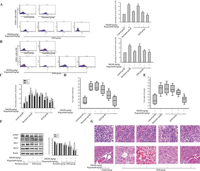 Wogonin potentiated the inhibitory effect of IM on leukemia development in NOD/SCID mice.