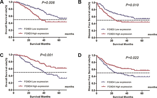 Influence of FOXO4 and FOXD3 expression patterns on overall survival and disease-free survival by Kaplan-Meier analyses in validated cohort.