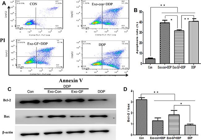 Exosomes derived from gefitinib-treated PC9 cells reduce cisplatin-induced apoptosis.