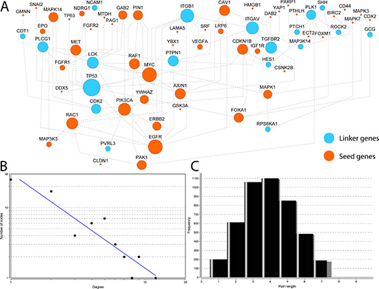 Reconstructed interaction map for EMT-implicated genes with CNGs and increased gene expression in matched tumor samples.
