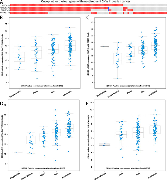 The correlation of CNVs and gene expression in the TCGA ovarian cancer cohort.