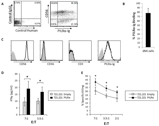 Increased IFNγ secretion and killing of PILRα-Ig positive dNK in response to PILRα expressing target cells.