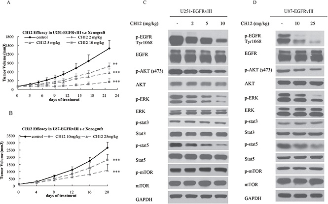 CH12 significantly suppressed the growth of EGFRvIII+PTEN– glioblastoma in vivo.