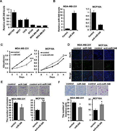 The effect of miR-340 on proliferation and invasion in breast cancer cell.