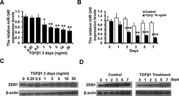 TGF-β signaling was involved in the feedback loop between miR-340 and ZEB1.