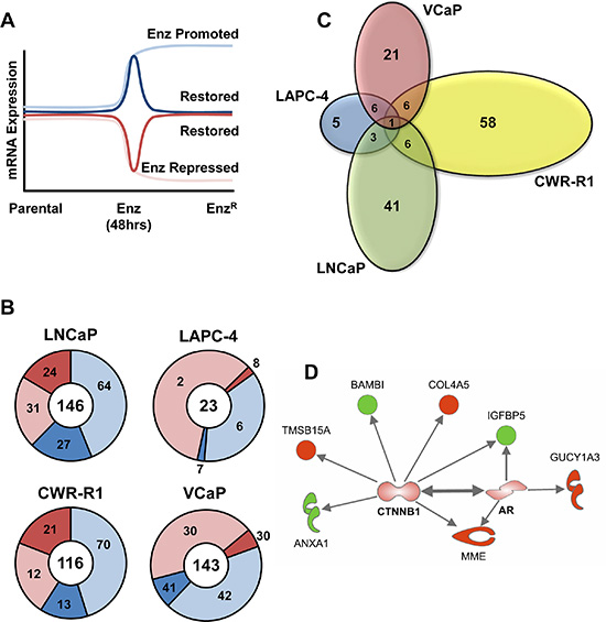 Analysis of adaptive altered AR-Regulated gene expression in EnzR cells.