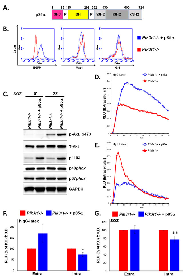 Re-introduction of p85α in
