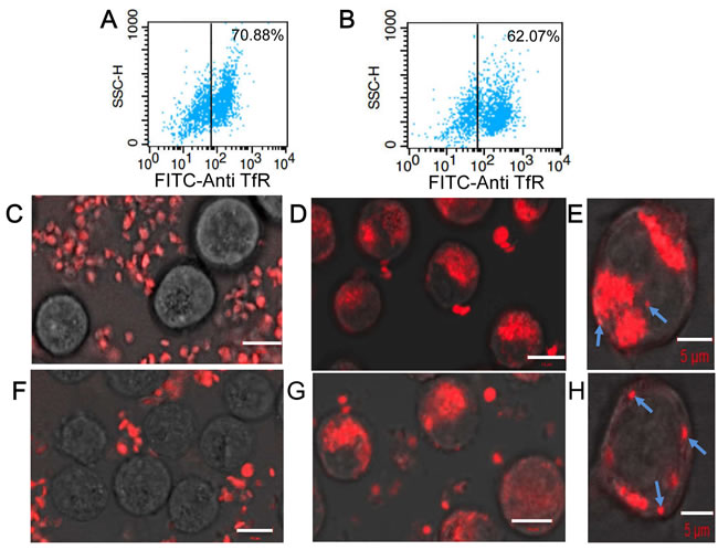 Characterization of interactions between KabC-platelets and tumor cells.