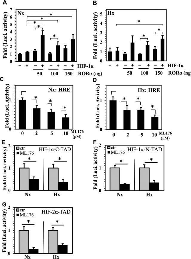 RORα controls HIF transcriptional activity and TAD function in NP cells.