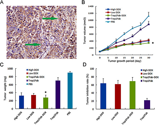 Trop2Fab-DOX inhibits the proliferation of PC cells in vivo.