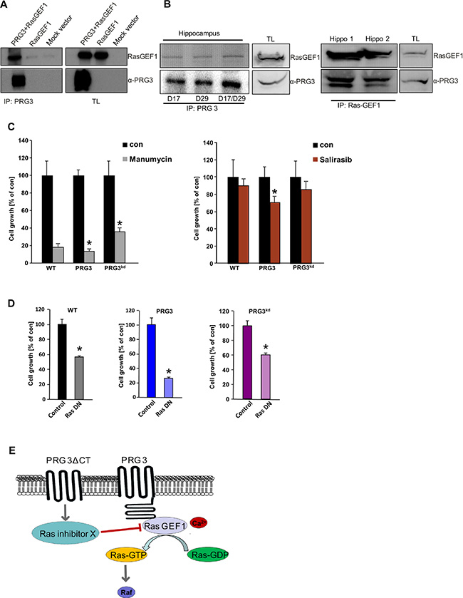 Oncogenic effects of imbalanced PRG3 are mediated via PRG3-RasGEF1 interaction and Ras activation.