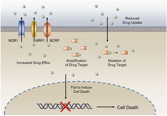 General mechanisms of cancer drug resistance.