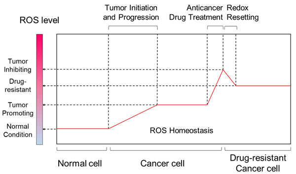 Comparisons of ROS level between different stages of tumor progression and tumor drug-resistance.