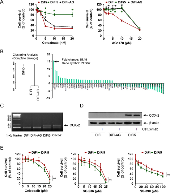 Characterization of EGFR inhibition-resistant DiFi sublines and identification of genes differentially expressed between cetuximab-sensitive and cetuximab-resistant DiFi cells.