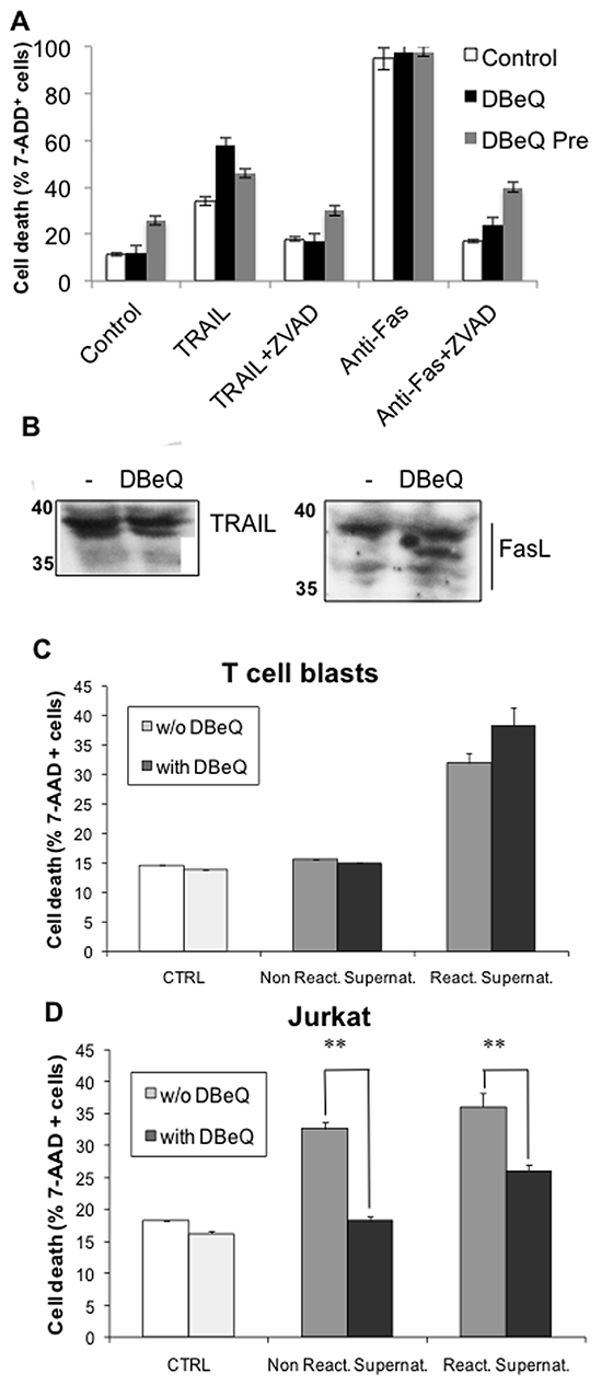 Effect of the VCP inhibitor DBeQ on exosomes release from T cell blasts or from tumoral Jurkat cells.
