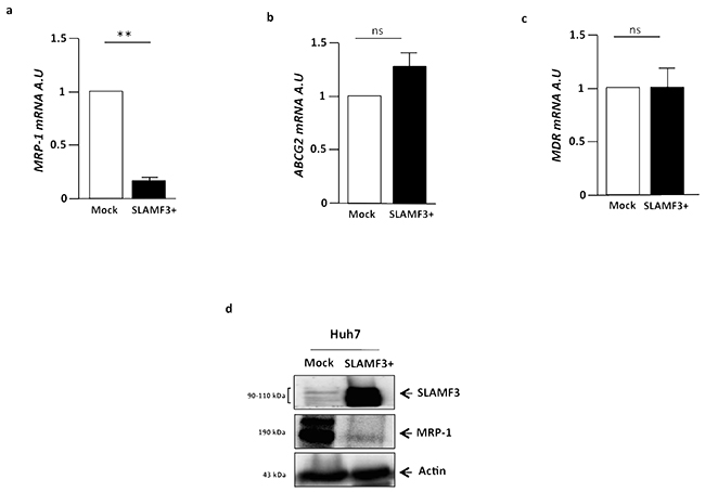 Cells from hepatocarcinoma express MDR transporters and SLAMF3 inhibited specifically MRP-1 expression.