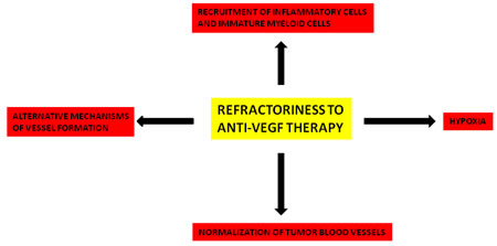 Principal mechanisms involved in refractoriness to anti-VEGF therapy.