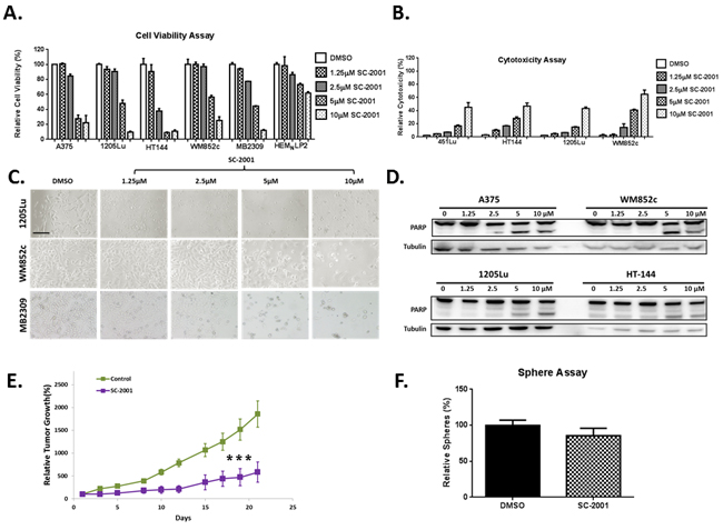 SC-2001 is capable of targeting the bulk of melanoma cells in vitro and in vivo, however it did not target the MIC population.