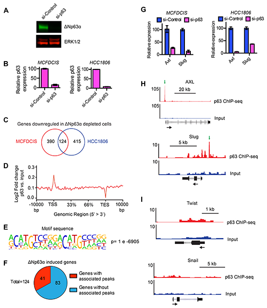Identification of genes induced by ΔNp63α.