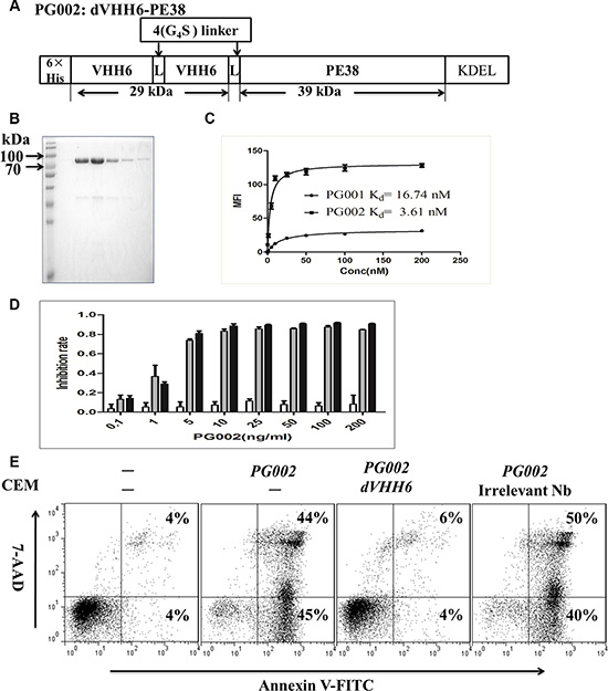 Generation of the bivalent nanobody-based immunotoxin PG002 and its cytotoxicity.