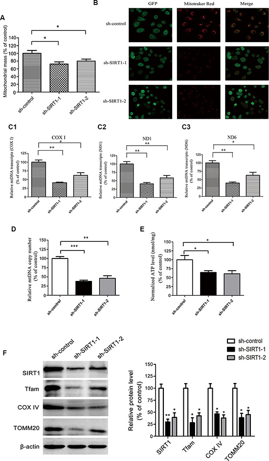 SIRT1 depletion attenuated mitochondrial biogenesis and biological energy production in HCC cells.