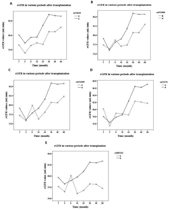 The influences of a11ele distribution of CTLA-4 SNPs on allograft function expressed as eGFR (estimated glomerular filtration rate) over 60 months: After renal transplantation, the eGFR trended upward in all allele groups (