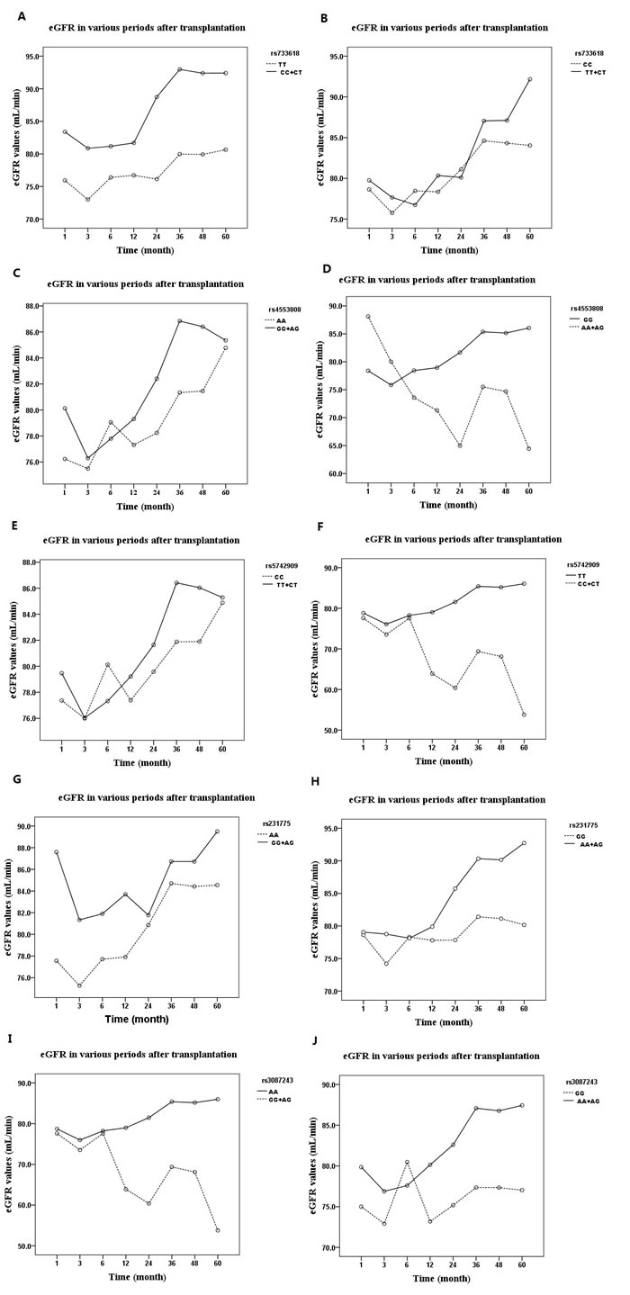 The influences of genotype distribution of CTLA-4 SNPs on allograft function expressed as eGFR over 60 months: