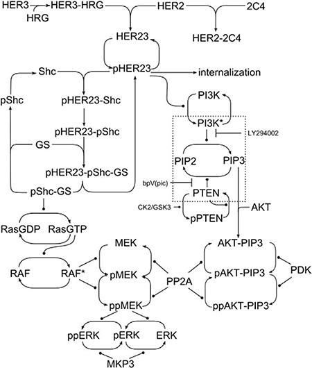 Network schematic.