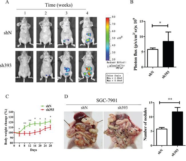 Silencing CMTM3 promotes tumor metastasis in vivo.