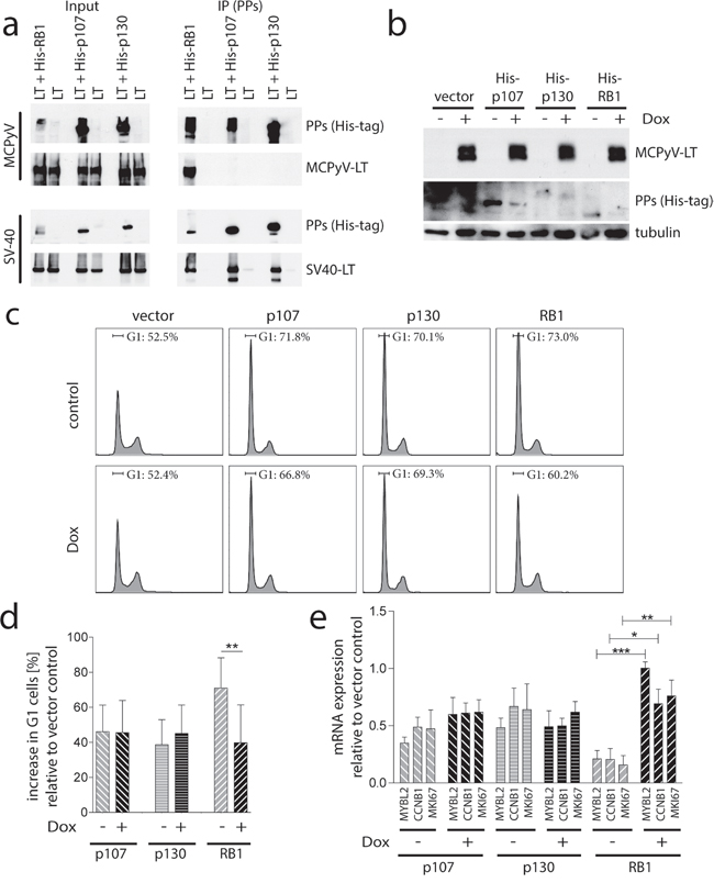 Preferential binding and inactivation of RB1 by MCPyV-LT