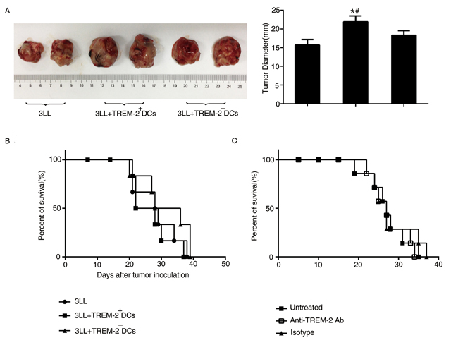 The effect of TREM-2 on tumor growth and survival.