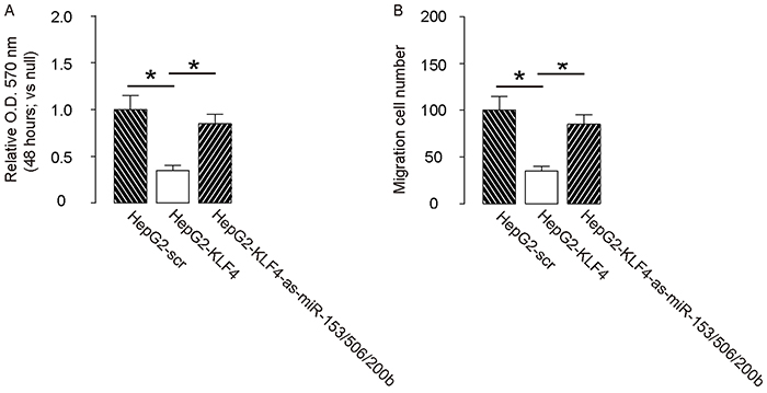 Depletion of miR-153, miR-506 and miR-200b abolishes the effects of KLF4 on HCC cell growth and invasion.