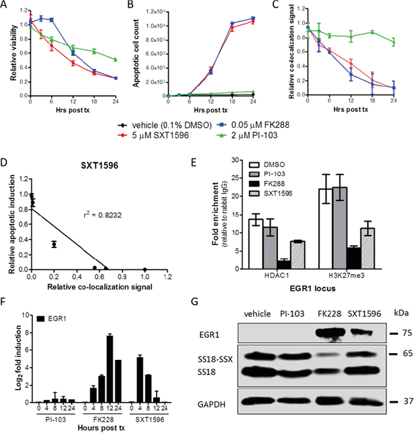 SXT1596 decreases cell viability and reactivates EGR1 expression in synovial sarcoma.