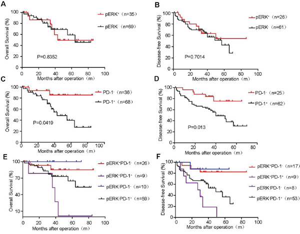 Kaplan–Meier survival curves of postoperative HCC patients stratified by pERK and PD-1 expression.