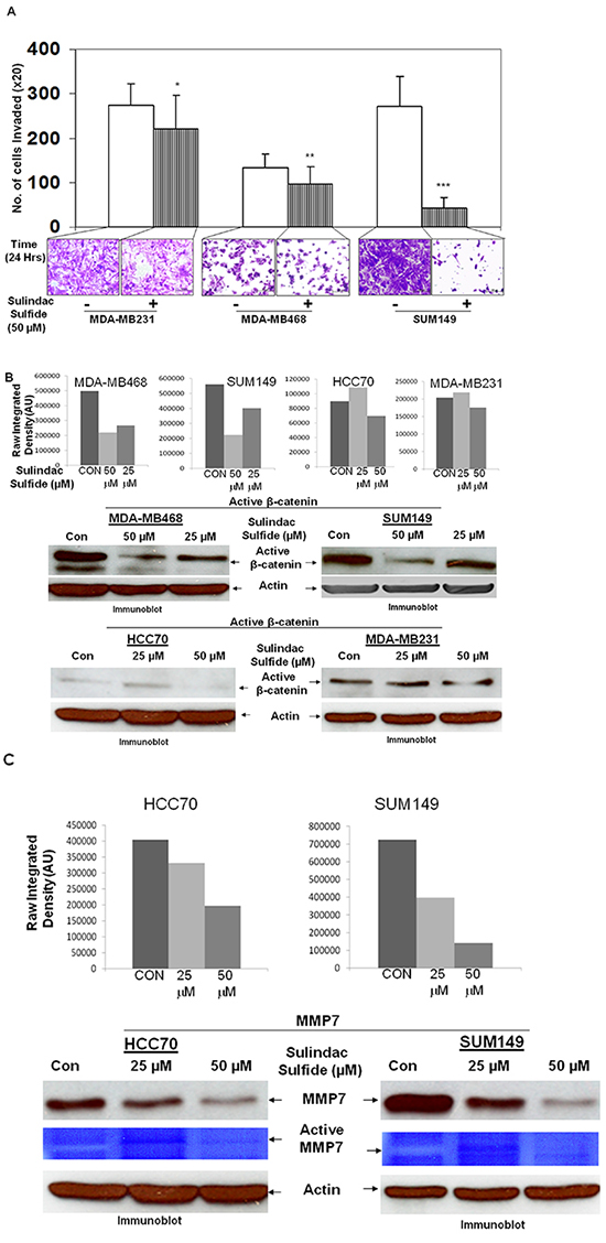Effect of Sulindac sulfide treatment on fibronectin-mediated invasion (A), levels of active beta-catenin (B) and expression/function of MMP7, a transcriptional target of active beta-catenin (C) in different TNBC cells.