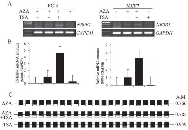 Synergistic effects of AZA and TSA on NR0B1 gene activation.
