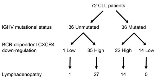Extent of BCR-mediated CXCR4 down-regulation is related to lymph node enlargement from IGHV mutated CLL patients.