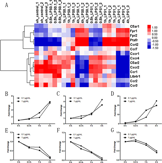 Effect of LPS stimulation on the expression of neutrophil chemoattractant receptors.